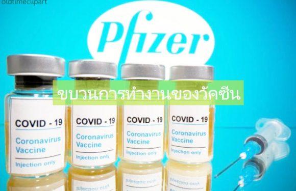 วิธีการทำงานของวัคซีน COVID-19 มาทำความเข้ากัน