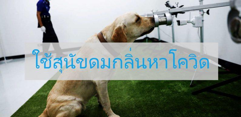 สุนัขดมกลิ่น สามารถช่วยค้นหาเชื้อไวรัสโควิดได้