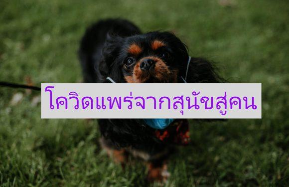 นักวิทยาศาสตร์ค้นพบ  เชื้อใหม่ที่ข้ามจากสุนัขสู่มนุษย์
