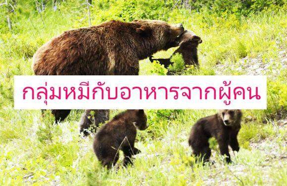เนยถั่ว จากนักท่องเที่ยวทำให้หมีเปลี่ยนแปลงพฤติกร