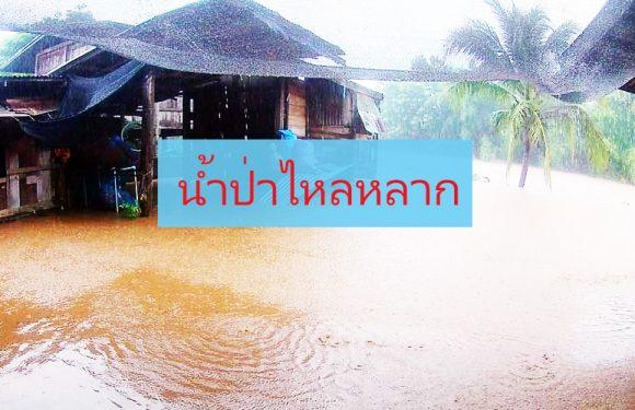 น้ำท่วมเฉียบพลัน ในจังหวัดสุราษฎร์ธานี เนื่องจากฝนตกหนัก